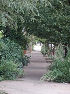 Woodsy Sidewalk in Pilsen, copyright Elaine Luther 2014