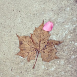 Leaf and Rose Petal, copyright Elaine Luther 2015