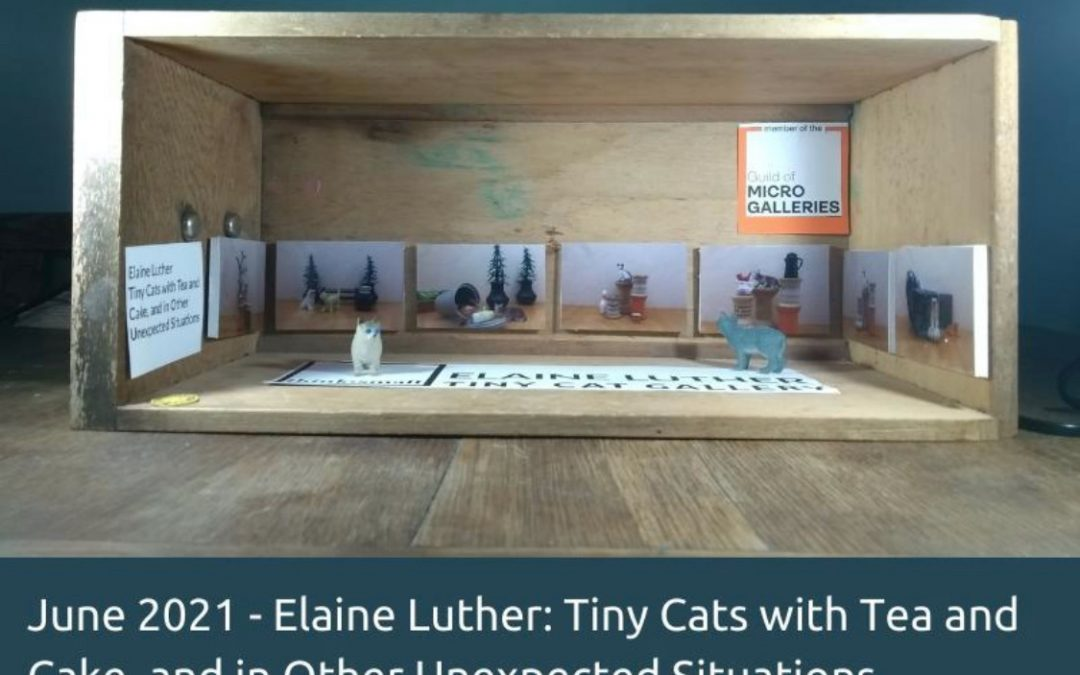 Elaine Luther's Photos in the Tiny Cat Gallery!